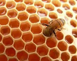 شرح الگوریتم کلونی مورچه و زنبور عسل